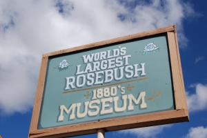 Largest Rosebush Museum sign