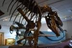 Tanner dinosaur