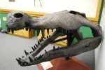 giant crocodile head