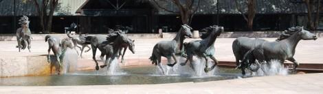 Mustangs of Las Colinas