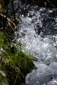 Mountain Stream in South Fork Canyon