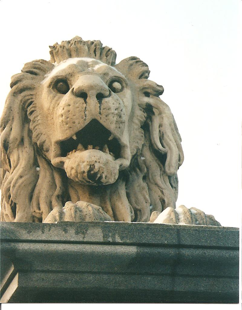 Lion from the Lanc Hid (Chain Bridge) in Budapest