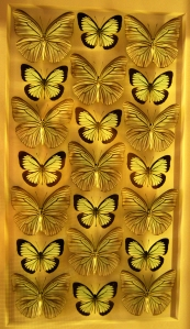 Butterfly art at Butterfly Wonderland