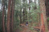 hugging a California Redwood at Muir Woods National Monument