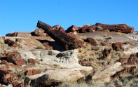17 Feb 2014 Petrified Forest National Park (123) copy
