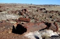 17 Feb 2014 Petrified Forest National Park (125) copy