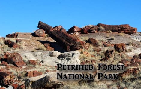 The Petrified Forest – a colorful depository of ancient lumber