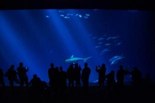 10 July 2012 Monterey Bay Aquarium (23)
