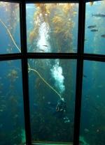 10 July 2012 Monterey Bay Aquarium (6)