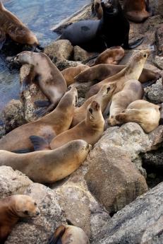 Monterey (5)