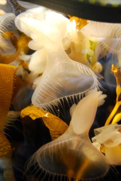 Monterey Bay Aquarium (117)
