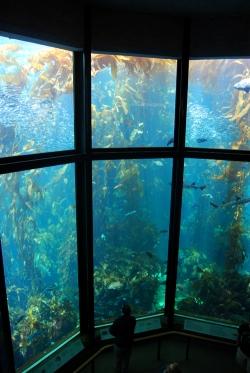 Monterey Bay Aquarium (127)