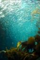Monterey Bay Aquarium (132)