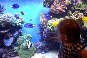 Monterey Bay Aquarium (136)