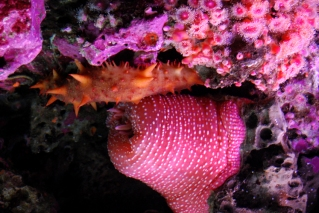 Monterey Bay Aquarium (210)