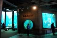 Monterey Bay Aquarium (26)