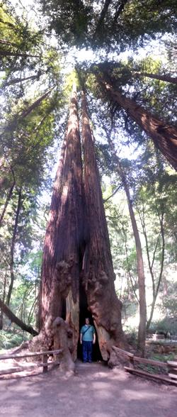 Muir Woods (101)