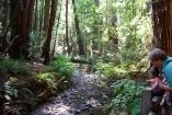 Muir Woods (63)