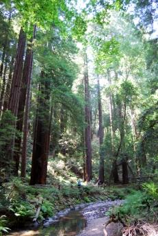Muir Woods (86)