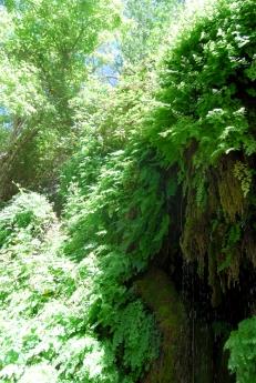 Tonto Natural Bridge 30 June 2014 (82)