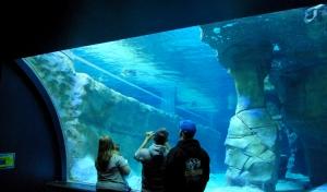 Aug 2014 Living Planet Aquarium (21)