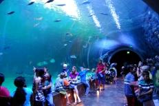 Aug 2014 Living Planet Aquarium (7)
