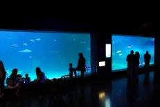 Aug 2014 Living Planet Aquarium (8)