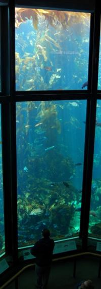 monterey-bay-aquarium-127