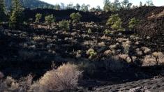 9 Nov 2014 Sunset Crater NM (13)