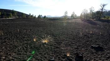 9 Nov 2014 Sunset Crater NM (27)